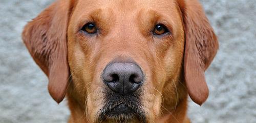 Koirahoitolan palvelut