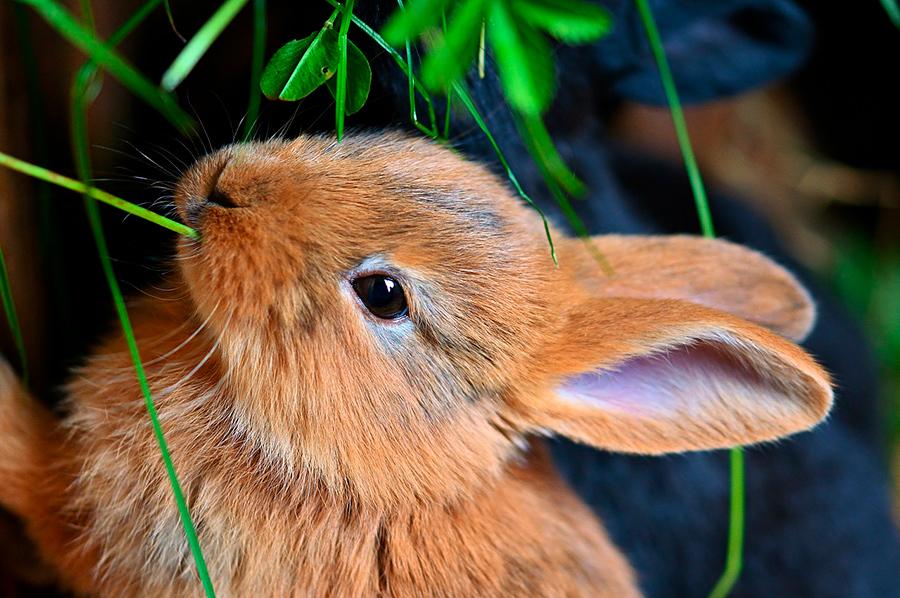 Lemmikkihoitola Janeter: hoidamme myös kaneja, marsuja, gerbiilejä, lintuja...